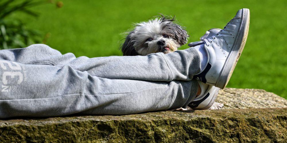 Hacer el Camino con tu perro